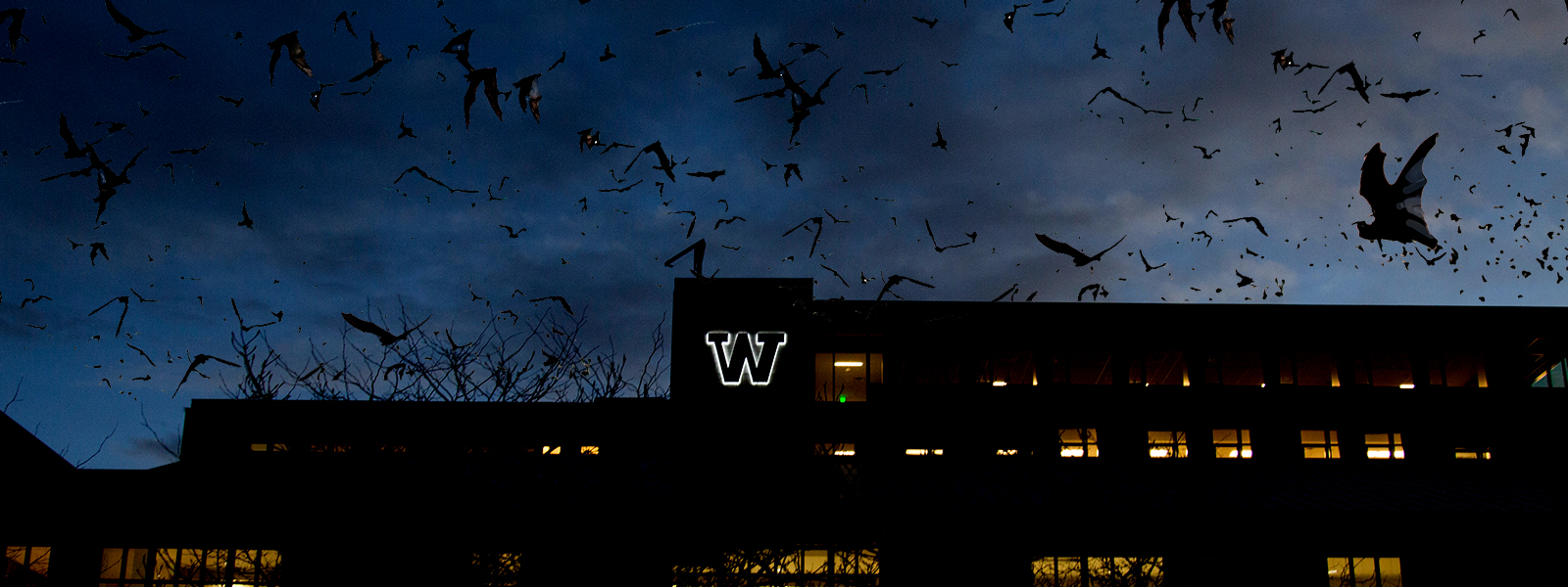 Photo illustration with bats in the sky at night above a UW Tacoma building